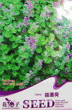 50 Original Pack Seeds Catnip Seeds Cat mint Nepeta cataria D033