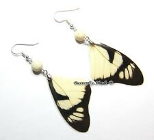 Unique Butterfly Earrings - Eurytides dolicaon - M31