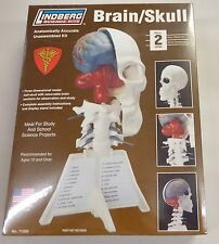 Lindberg 10.5 Inch Half Skull With Removable Brain Sections Anatomy Model Kit