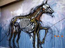 ART PRINT POSTER PHOTO GRAFFITI MURAL STREET INSECT HORSE NOFL0234