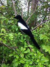 Gazza da richiamo per trappole uccelli,realistica,per la caccia
