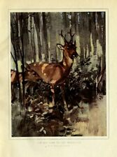DEER STAY COVERED IN WOODLAND, BUCK AND DOE, VINTAGE COLOR WILDLIFE PRINT, DEER