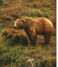 "BEAR, Grizzly with Cubs on ONE 16 inch Fabric Panel to Sew.Actual Pic 8x10""-Sale"