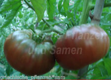 Riesen-Tomate BLACK GIANT negro 10 Semillas Tomates gigantes magnífico regalo