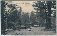 CARTOLINA d'Epoca - COSENZA provincia - SILA: Paesaggio 1932  -- N. 67185 4547a