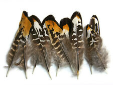 6 Pieces - Golden Yellow Reeves Venery Pheasant Small Quill Feathers
