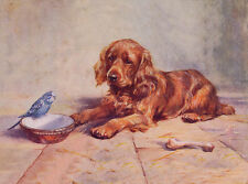 COCKER SPANIEL CHARMING DOG GREETINGS NOTE CARD GOLDEN PUPPY AND BIRD ON DISH