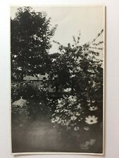 Vintage Real Photograph / Postcard - #A - Unknown Garden By Jerome