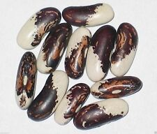 Vermont Appaloosa Bean,200 Seeds(Phaseolus Vulgaris) Bush/Dry Shell,Heirloom !