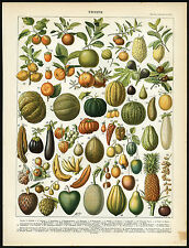Antique Print-FRUIT-BANANA-TOMATO-MANGO-LEMON-MELON-PAPAYA-FIG-Larousse-1897