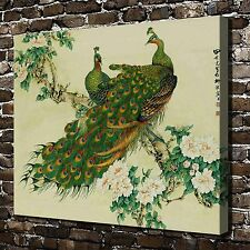Beautiful peacock Paintings HD Print on Canvas Home Decor Wall Art Picture