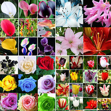 600 seeds of Tulips Lily Lilies Calla Roses flowers Tulipa lilium rosa MEGA PACK