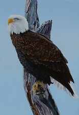 John Rutherford Bald Eagle Original Painting Canadian Listed Artist