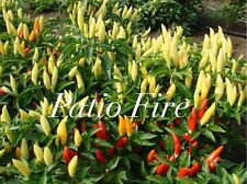 HOT CHILLI PEPPER - PATIO FIRE - 10 SEEDS