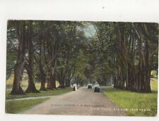 Lime Tree Avenue Inverary On Board Turbine Steamer SS King Edward Postcard 197b
