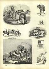 Old Engravings Neapolitan Calesso Pompeii Chariot Two Horse Litter