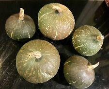 ☺10 graines de potimaron vert bio récolte fréjus 2016. Excellente saveur