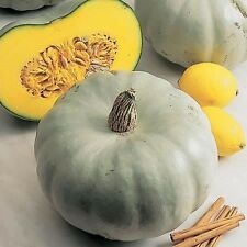 SQUASH - CROWN PRINCE - 20 FINEST SEEDS