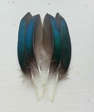 Fly tying / Native crafts / art - Ringed Teal iridescent-patch wing feathers