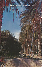 Postcard California Indio Coachella Valley Date Harvest Riverside County 1960s