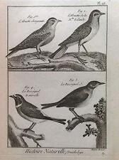 ALLODOLA USIGNOLO  Benard 1790 HISTOIRE NATURELLE Ornitologia Uccelli