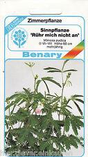 Sinnpflanze Mimosa pudica Mimose Rühr mich nicht an 80 Pflanzen Benary Samen