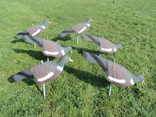 6 PIGEON DECOY SHELL HIGH DEFINITION PAINTED DECOYING with STICKS PEGS SHOOTING