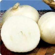 ONION Long Day White Spanish ONION SEED, 25 SEEDS PER PACKAGE.