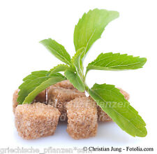 stevia rebaudiana stevia Sugar substitute 0 Calories 100 fresh seeds