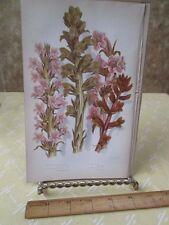 Vintage Print,BROOM RAPES,Plate148,Flowering Plants,Great Brit,Pratt