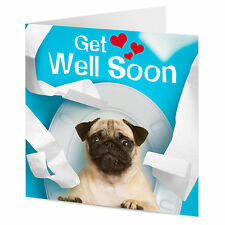 Funny humorous Pug dog on the toilet 'GET WELL SOON' greetings card