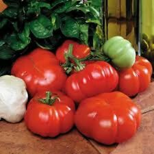 Organic Heirloom 25+ Costoluto Genovese Unbelievable Flavor for Pastes and Sauce