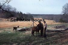 KODACHROME 35mm Slide Farm Man Hat Pretty Sexy Girl Ploughing Field Horses 1976!