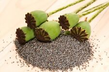 1 POUND (LB) BULK Afghan Blue Poppy Seeds Unwashed & Vacuum Packed for Freshness