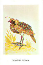 CALENDRIER POCKET CALENDAR BULGARIA 1983 Anhima cornuta Horned screamer Kamichi