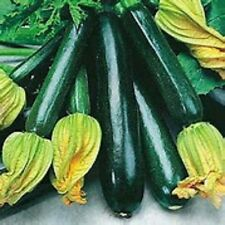 25 Black Beauty Zucchini summer squash Seeds Heirloom Organic No GMO RARE
