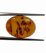 3.39 Cts. Lab Certified Natural Golden Honey Baltic Amber Cabochon