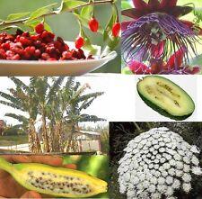 WOW ! Vier tolle Pflanzen die nicht jeder hat ! Riesenbanane / Gojibeere u. mehr