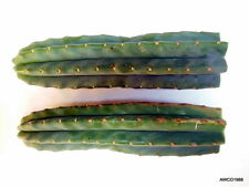 "TWO LARGE, 12 "" LONG SAN PEDRO CACTUS TIP CUTTINGS, T. PACHANOI, FREE SHIPPING!"
