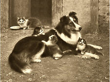 BORDER COLLIE AND KITTENS LOVELY DOG GREETINGS NOTE CARD