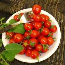 Vegetable - Tomato - Hundreds and Thousands 10 Seed