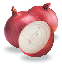 250 RED BURGUNDY ONION Allium Cepa Vegetable Seeds GIFT