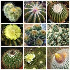 100 semillas mezcla de Eriocactus , cactus mix, plantas suculentas,seeds mix S
