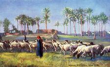 """Egypt -Bedouin Shepherds near Cairo (R.Tuck """"Oilette"""" 7202)"""
