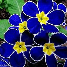 Hot Sale 100X Rare Blue Evening Primrose Seeds Easy to Plant Garden Decor Flower