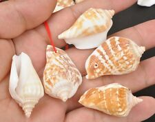 5pcs drilled hole  Conch Seashell beads shell  Jewellery pendants 35-45mm
