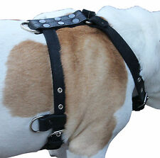 "Genuine Leather Dog Harness 25""-32"" chest, 1"" wide Adjustable Straps Pitbull"