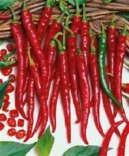 Pepper Seeds Hot Pepper 500 Cayenne Long Slim Chili Pepper Seeds PEPPERS