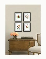 "Set of 4 vintage Hummingbird Wall art Prints 8x10"" wall hanging decor unframed"