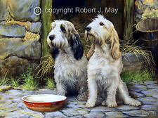 Original Basset Griffon Vendeen Painting by Robert May